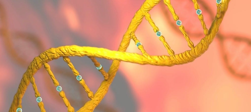 "New ""Prime Editing"" Method Makes Only Single-Stranded DNA Cuts"
